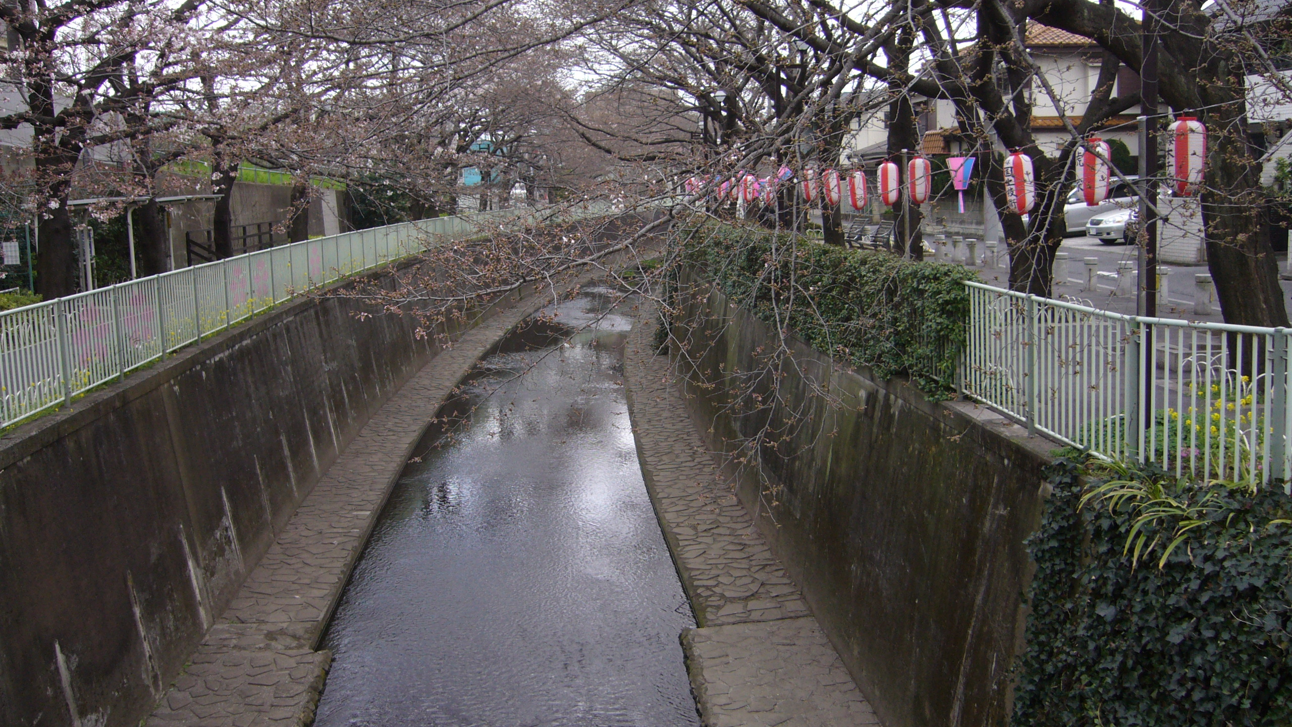 takaido09sakura-3.jpg